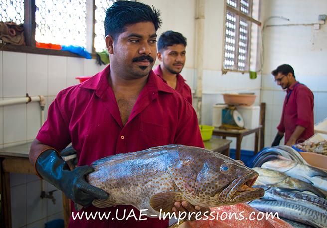 Bildergalerie vom Fischmarkt in Ras Al Khaimah